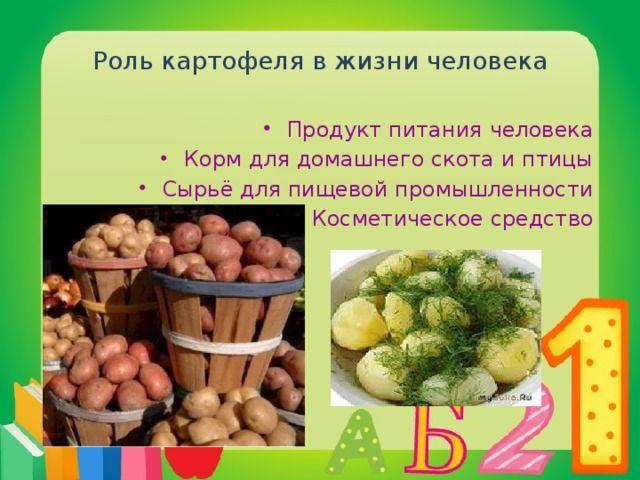 Проект Картофель в жизни человека